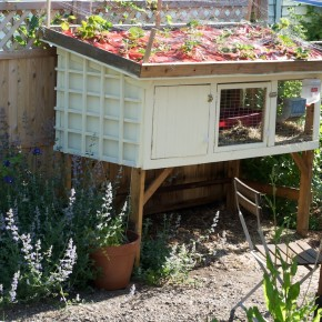 Green Roofs for Rabbit Hutches