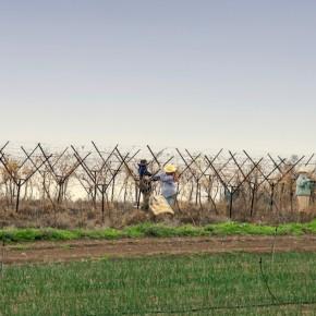 Winery Israel