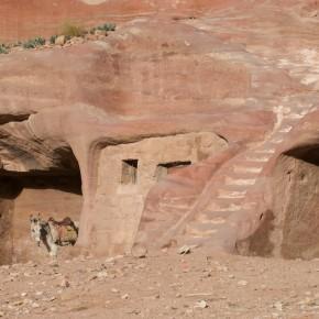 Donkey Petra Jordan