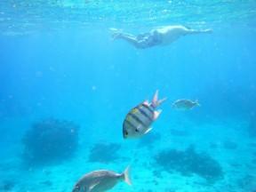 Fat Guy Snorkeling