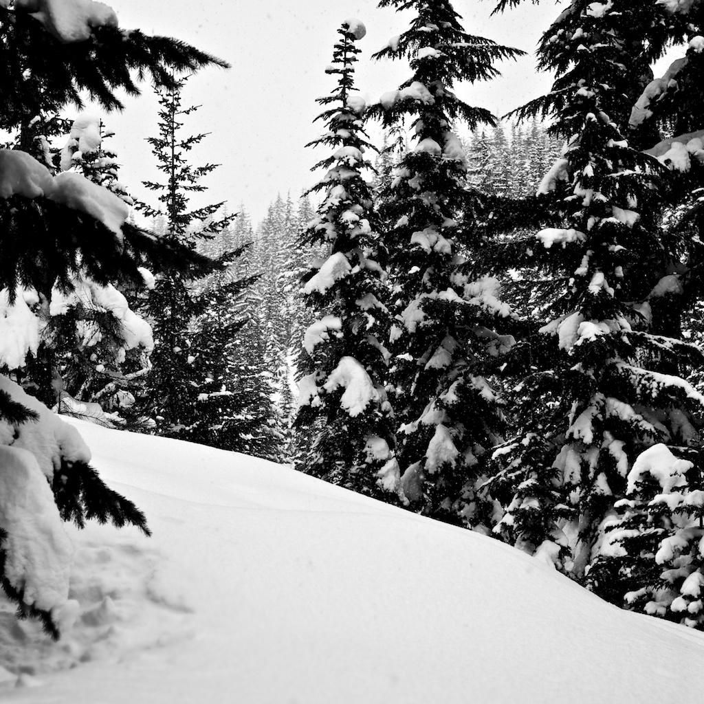 Snowshoe to Keechelus Ridge