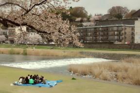 Hanami (Blossom Party) along Saigawa River