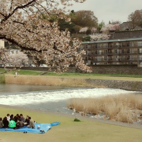 Hanami (Blossom Party) along Saigawa River