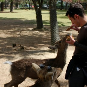 Victor feeding the deer of Nara