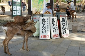A cost Victor did not account for: feeding deer