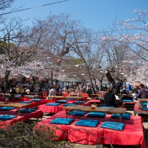 Cherry blossom parties in Maruyama Park