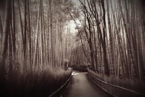 Bamboo Paths in Arashiyama