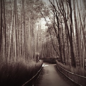 Bamboo Paths in Arashiyama