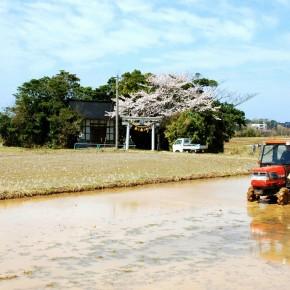 Working rice paddies
