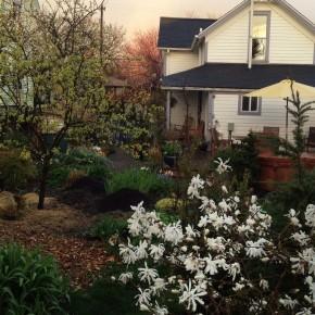 The Garden Grows In: Spring 2012