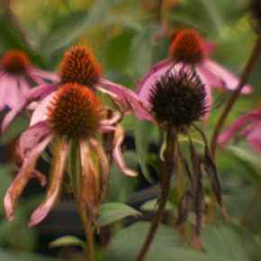 Clouds and Flowers: Fall in the Northwest Garden