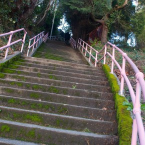 Capitol Hill Stair Walk: The Big Ones!