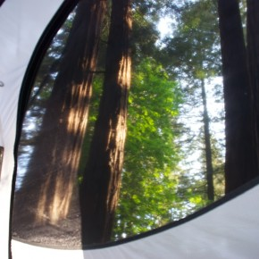 Camping in Redwoods, Sam Taylor Park