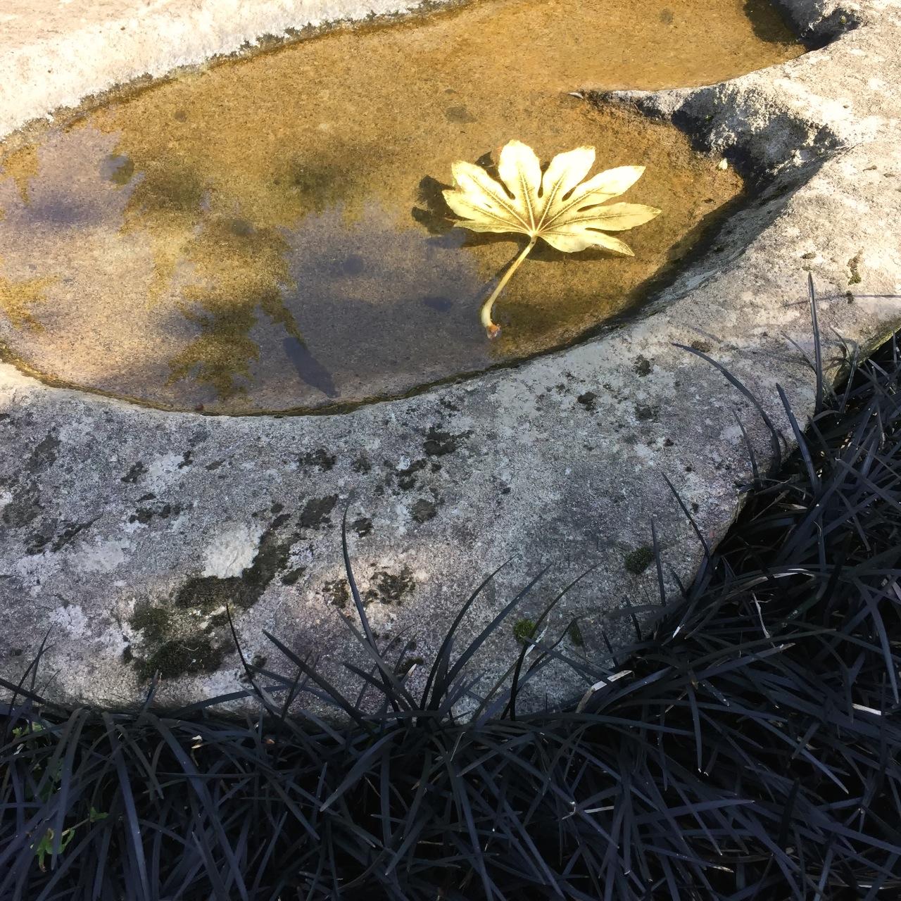 Mondo Grass and Water Kubota Garden Seattle