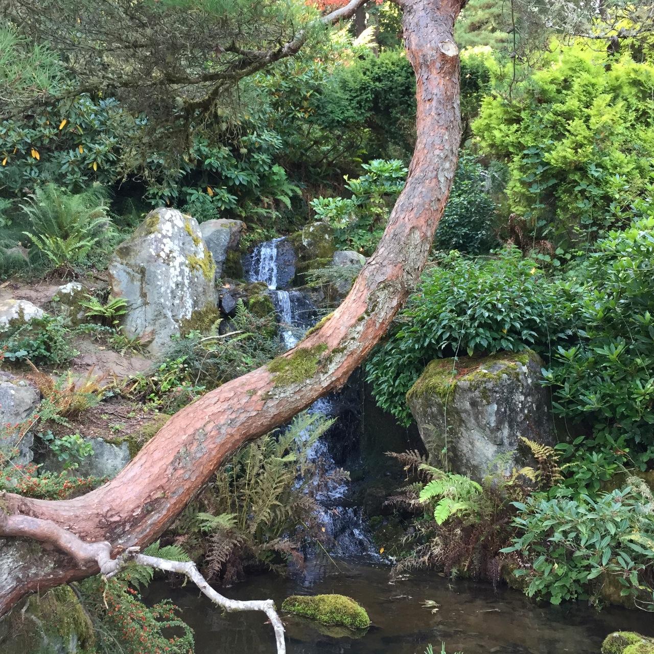 Mountain Garden Kubota Garden