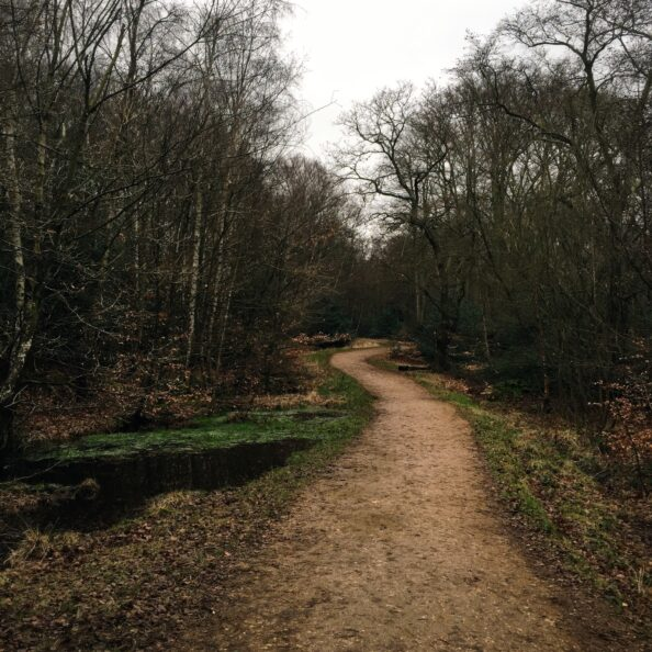A path through the Epping Forest.