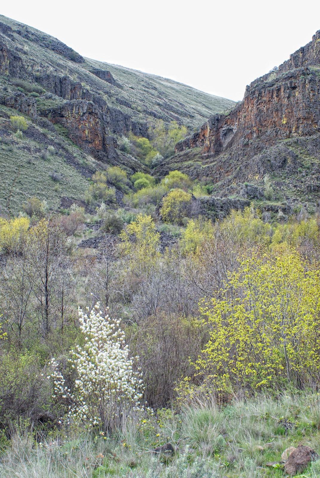 Yakima Canyon Side Canyon Umtanum Canyon